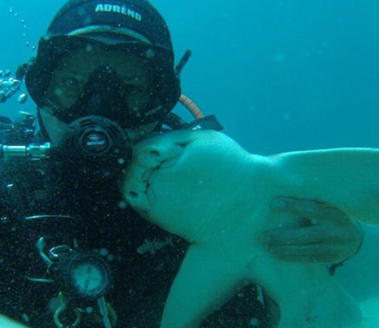 Este tiburón hembra nada hasta un buceador en búsqueda de un abrazo
