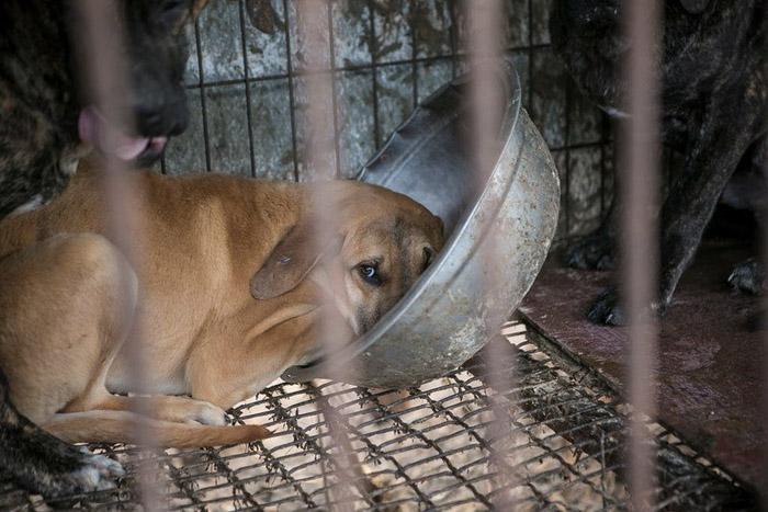 Estos perros viven en deplorables condiciones