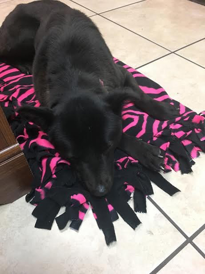Harriet obtuvo su primer cama