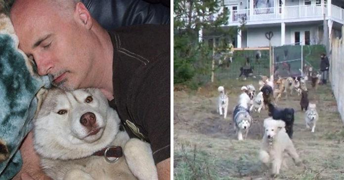 Hombre construyó un recinto para sus perros rescatados