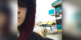 Hombre quería ayudar a un perro extraviado