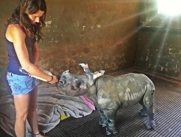 La rinoceronte Nandi y su cuidadora
