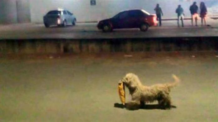 Max, el perro saqueador