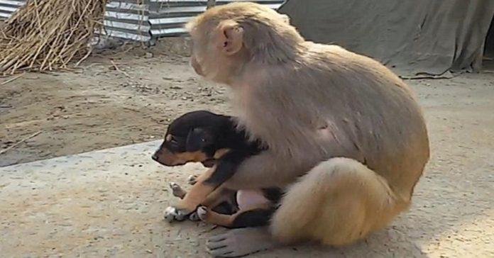 Mono adoptó a un perro sin hogar que estaba deambulando por las calles
