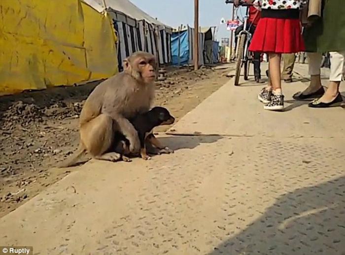 Este mono adoptó a un perro