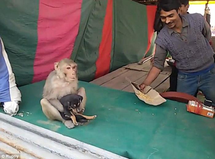 Mono adopta a un perro en la India