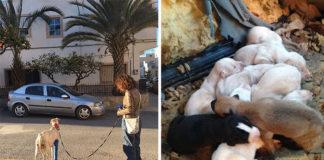 Perra con la pata rota guía a un veterinario 3 km para rescatar a sus cachorros
