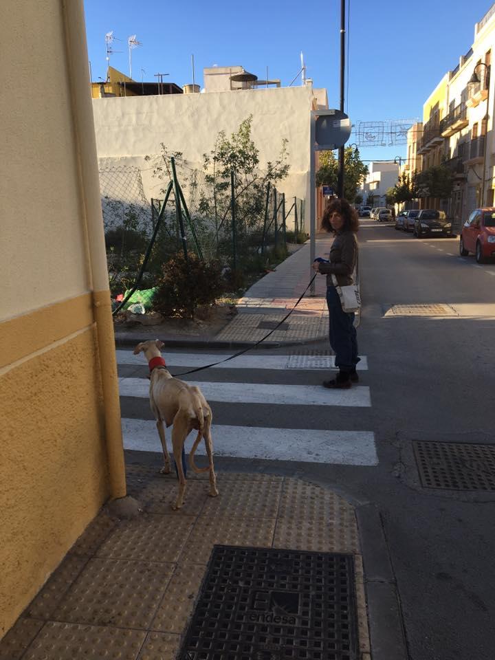 Perra con la pata rota guia a un veterinario para salvar a sus cachorros