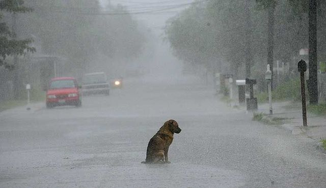 Perrita estaba empapada bajo la lluvia desconsolada