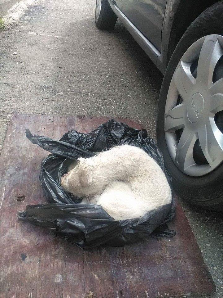 Cane abbandonato in un sacco della spazzatura