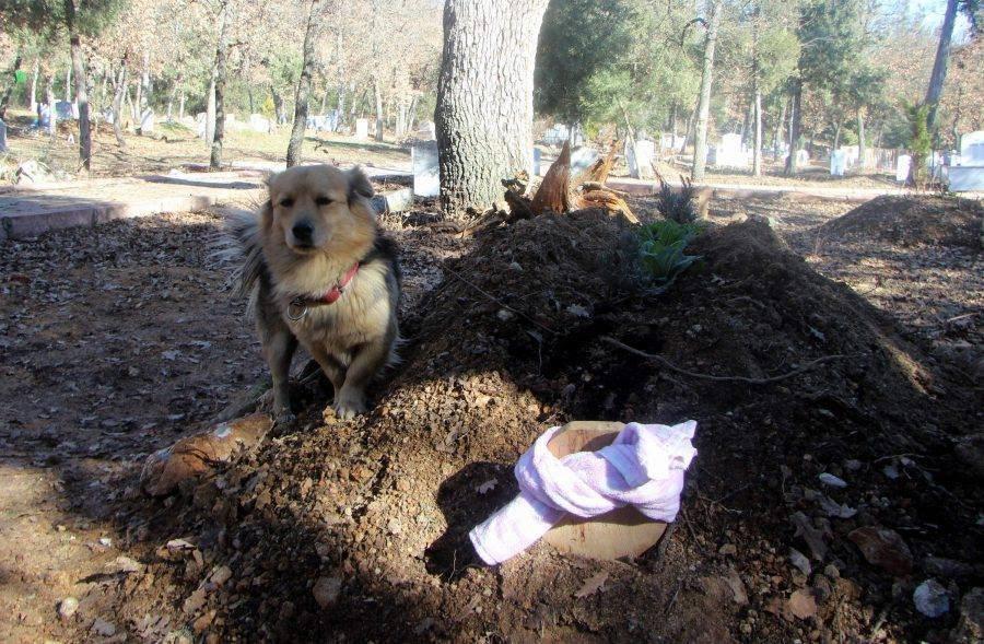 Perro en el cementerio