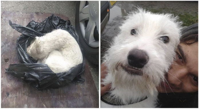 Perro encontrado casi muerto ahora es feliz