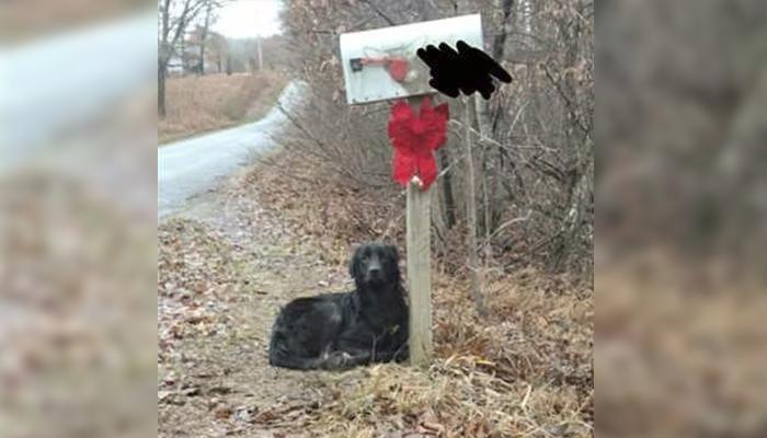 Perro esperó a su padre humano al lado de un buzón