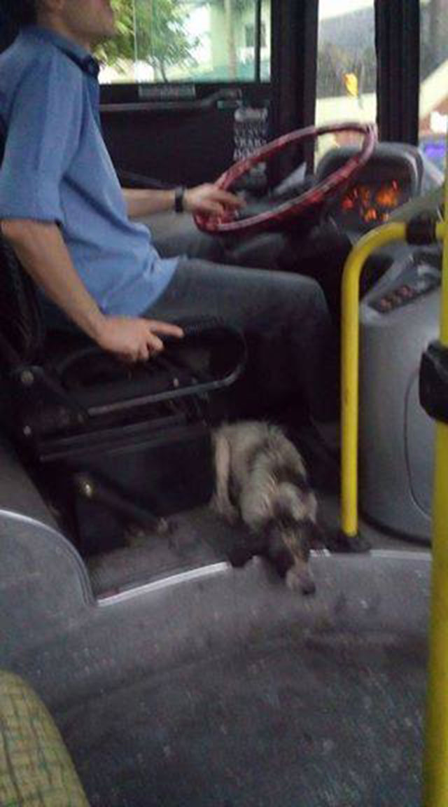 Perro protegido en autobús