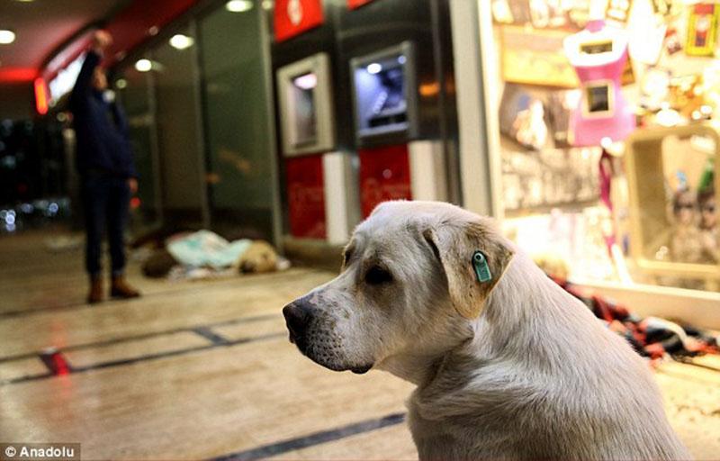 Perro se refugia en centro comercial