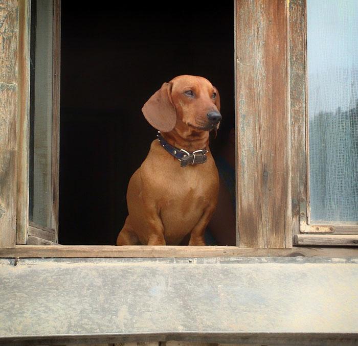 Perro solo en casa