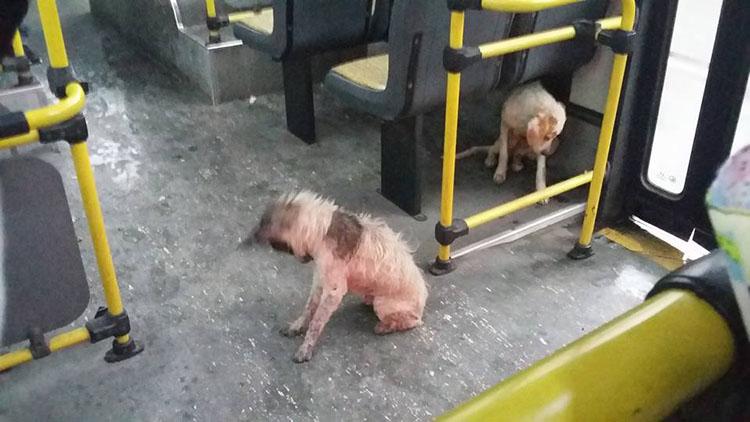 Perros en autobús