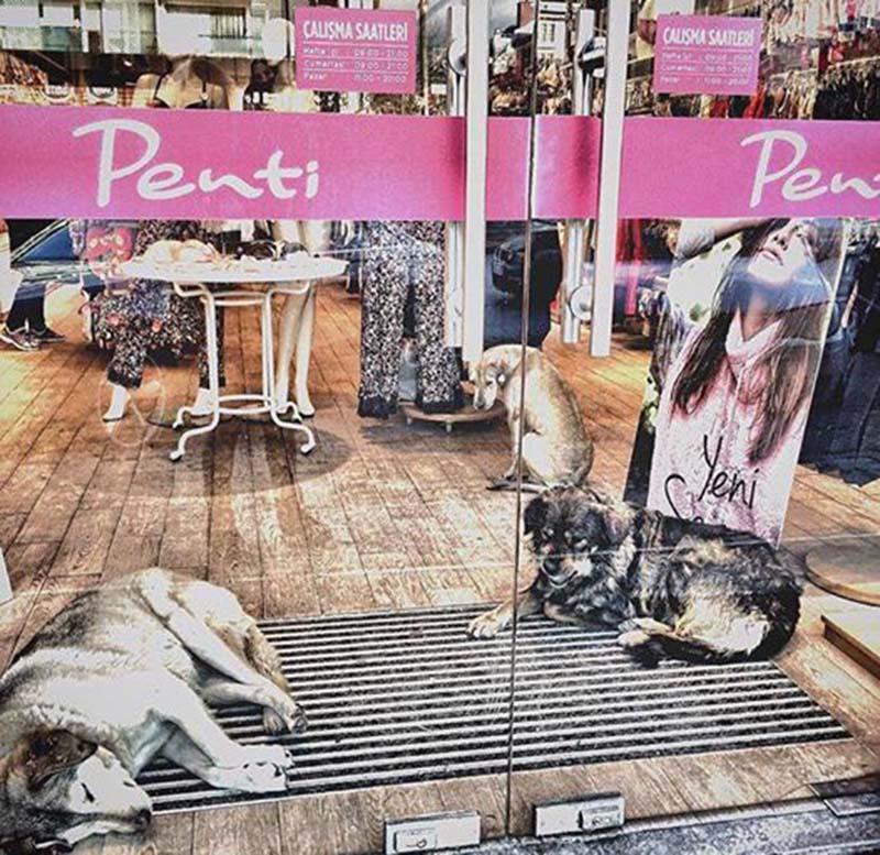 Perros se refugian en tiendas