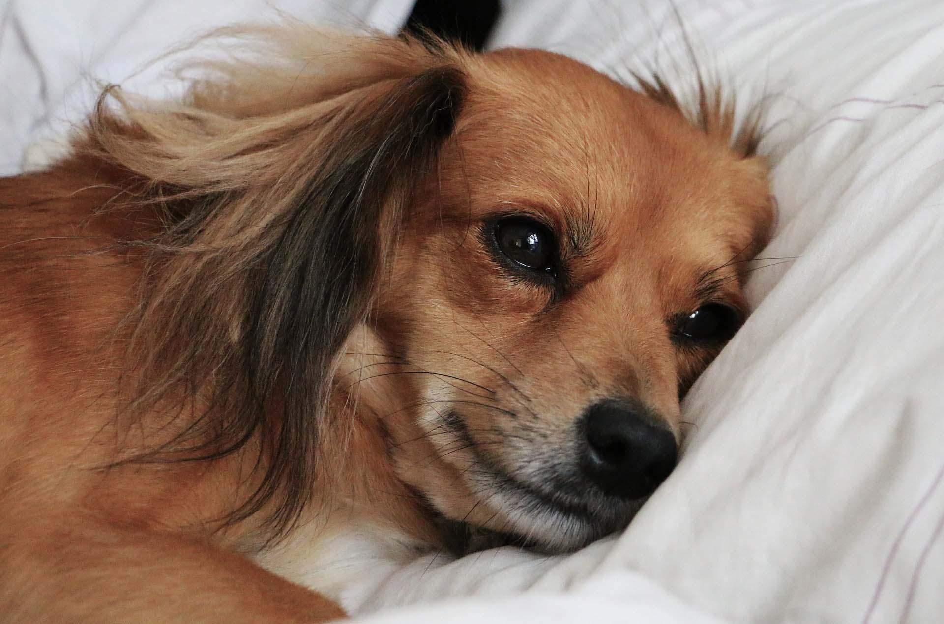 Happy Dog Pet Hotel