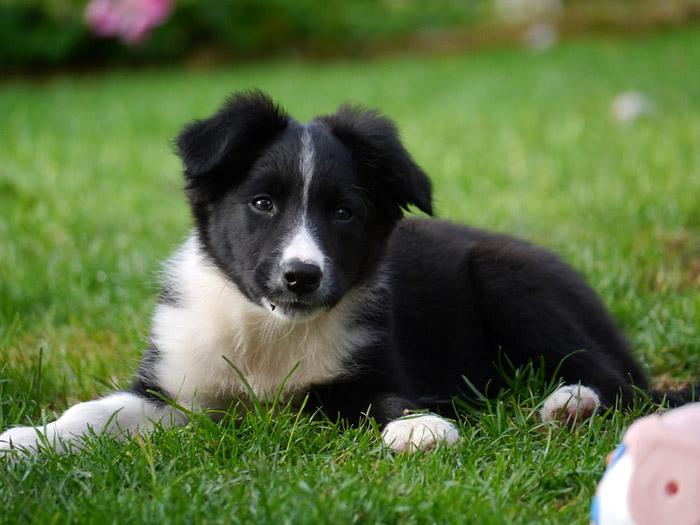 Los cachorros necesitan recibir una buena atención por parte de su familia