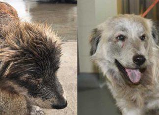 Una perra sin hogar estaba empapada, tenía miedo, pero alguien la ayudó