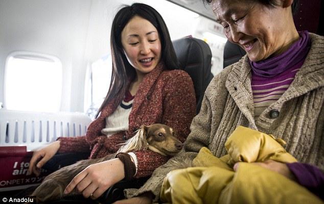 Volando con perros