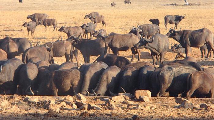 Animales salvajes son ayudados por Patrick Kilonzo Mwalua