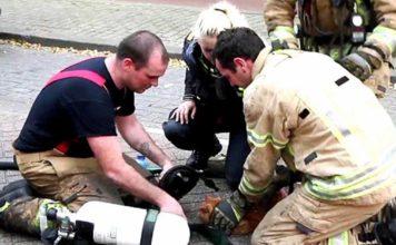 Bomberos salvaron a un gato que se encontraba en un edificio en llamas