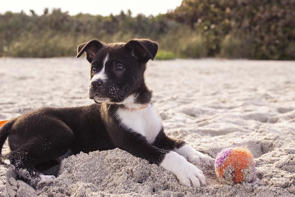 Cachorro juega con pelota