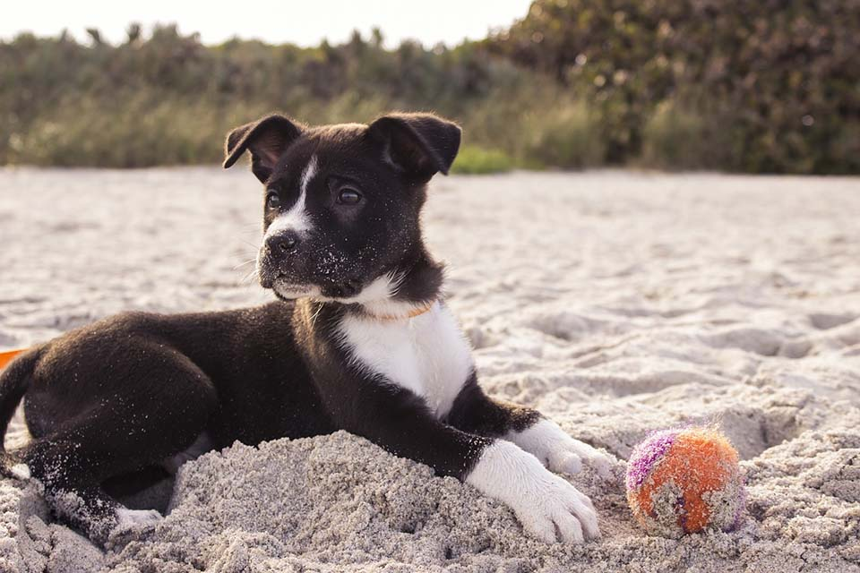 Cachorro - nombres para perro