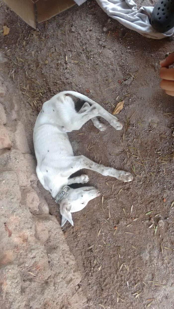 Cadaver de uno de los perros