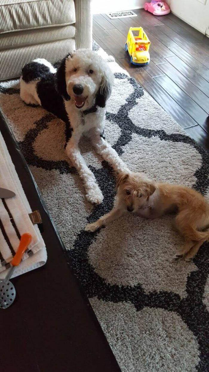 Celia encontró una nueva familia que la valora