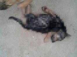 Cruel matanza de perros en Argentina