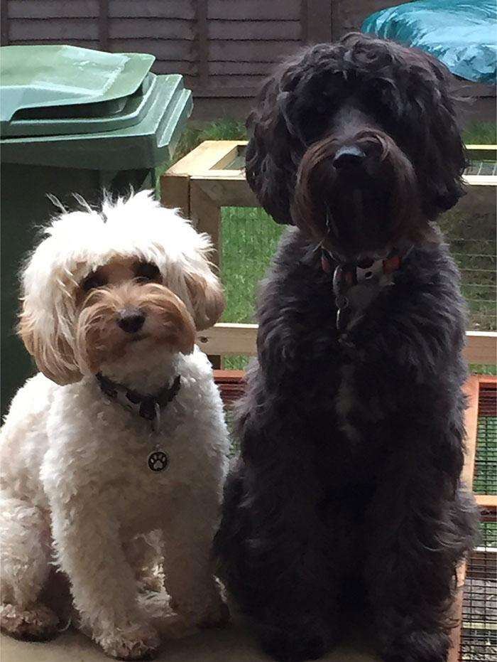 Dexter y Georgie