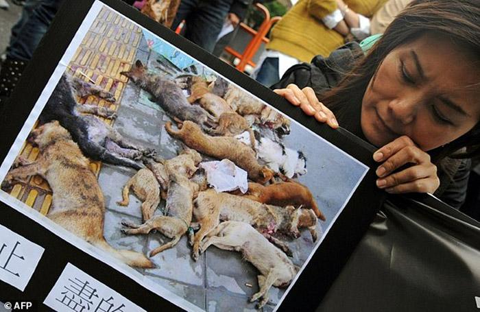 En Taiwan queda prohibido el sacrificio de animales sin hogar