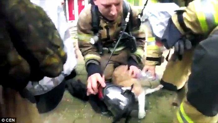 Equipos de bomberos salvaron a un gato