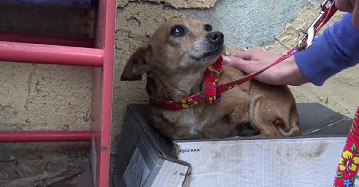 Esta perra con tres patas durmió en una caja de zapatos durante semanas