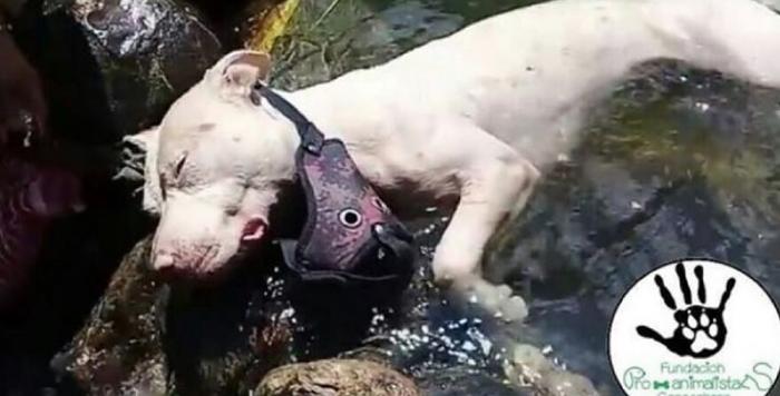 Esta perra fue encontrada ahogada, al parecer fue arrojada a un charco