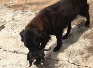 Esta perra salvó a un cachorro que al parecer fue arrojado en la basura