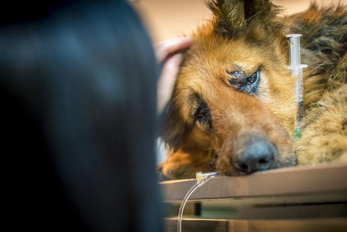 Esta perra sufrió un brutal ataque