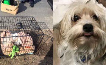 Este adorable perro fue abandonado en una jaula al lado de la carretera