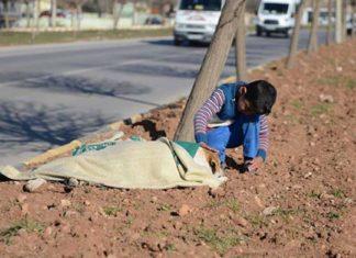 Este niño refugiado cuidó a un perro lesionado hasta que llegó ayuda