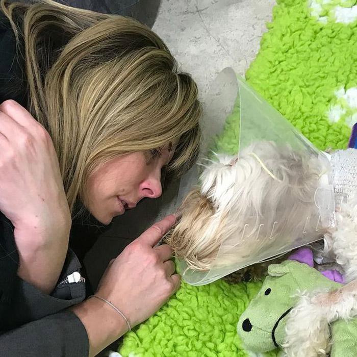 Este perro falleció debido al sindrome de shock tóxico