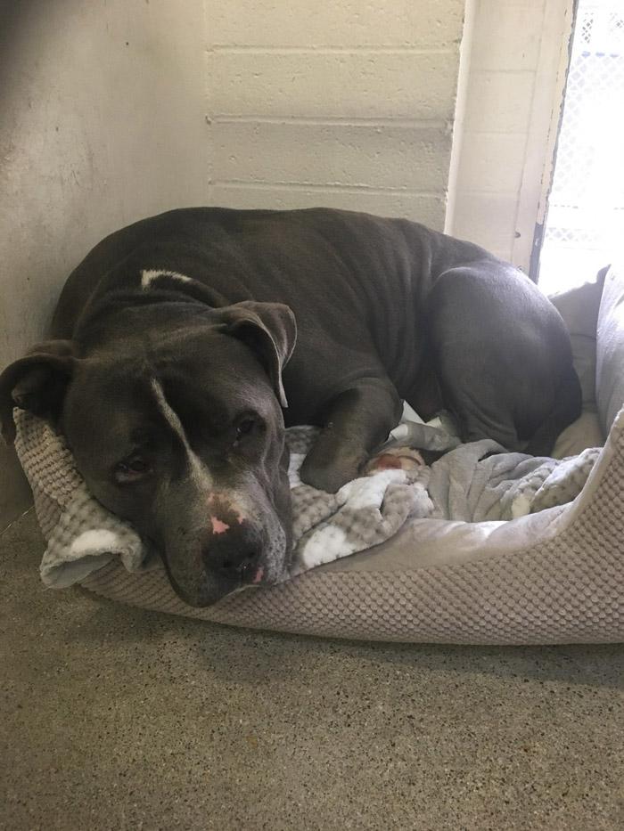 Este perro lloraba porque su familia lo abandonó
