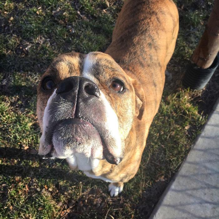 Este perro regresó al refugio, pero ahora tiene una nueva familia