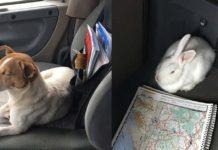 Este perro rechaza ser rescatado sin su amigo