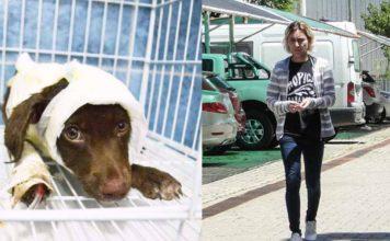 Liberaron al presunto asesino de Chocolate, el perro que fue despellejado