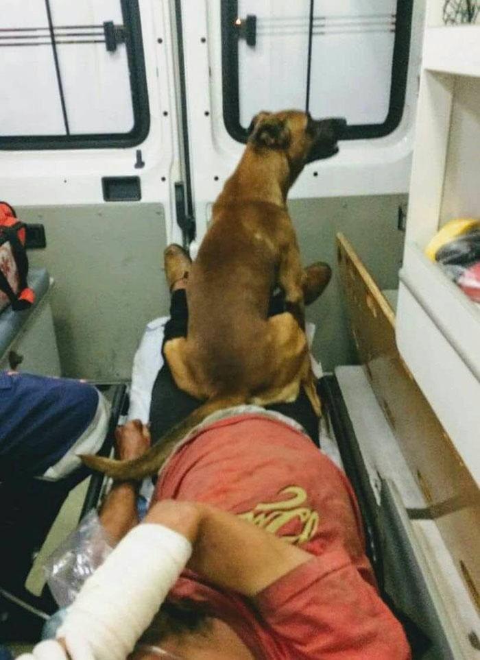 Marrom en la ambulancia