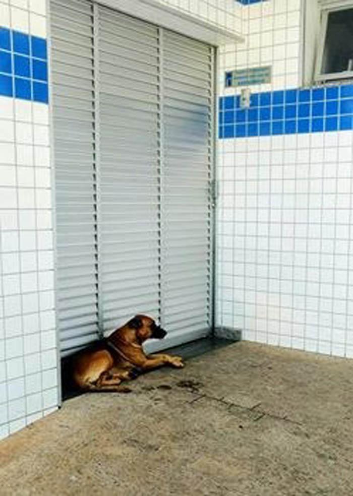 Marrom es un perro muy leal