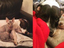 Esta mujer adoptó a una gata tuerta y temía la reacción de su perra